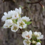 Blüten Alternativer Text