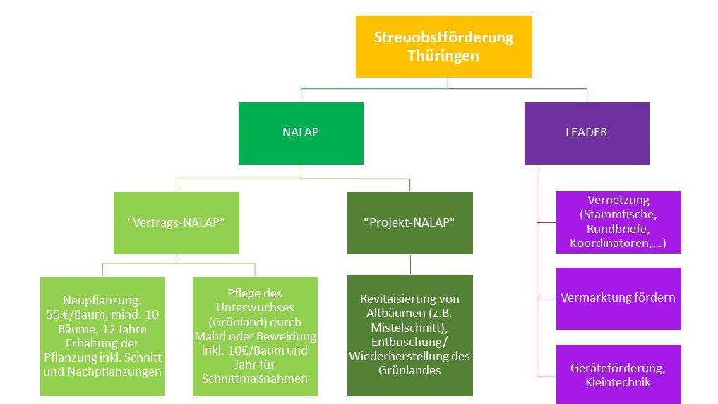 Förderung Streuobst Thüringen